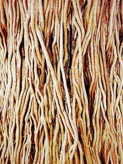 Nature Abstract Abstract Nature Art Close Up Close Up Photography Texture Pattern Texture And Pattern Roots Root Roots Of Tree Art Art Photography Nature Art Photography Abstract Photography Imagination Imagination Photography Imagination Collection