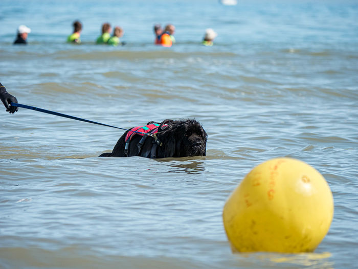 View of dog swimming in sea
