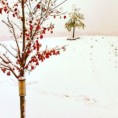 Beauty In Nature Branch Close-up Cold Temperature Day Field Flower Fragility Freshness Growth Landscape Nature No People Outdoors Scenics Sky Snow Tranquility Tree Weather White Color Winter