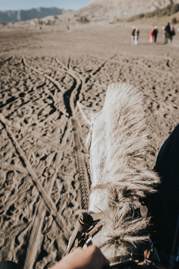 Close-Up Of Person Riding Horse At Beach