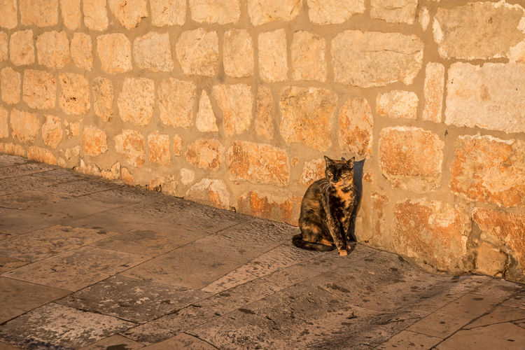 Stray cat in Dubrovnik Dubrovnik Cat Feline Mammal Domestic Cat Pets Domestic Animals One Animal Domestic Vertebrate Wall - Building Feature No People Architecture Day Wall Built Structure Relaxation Sitting Brick Stone Wall Paving Stone