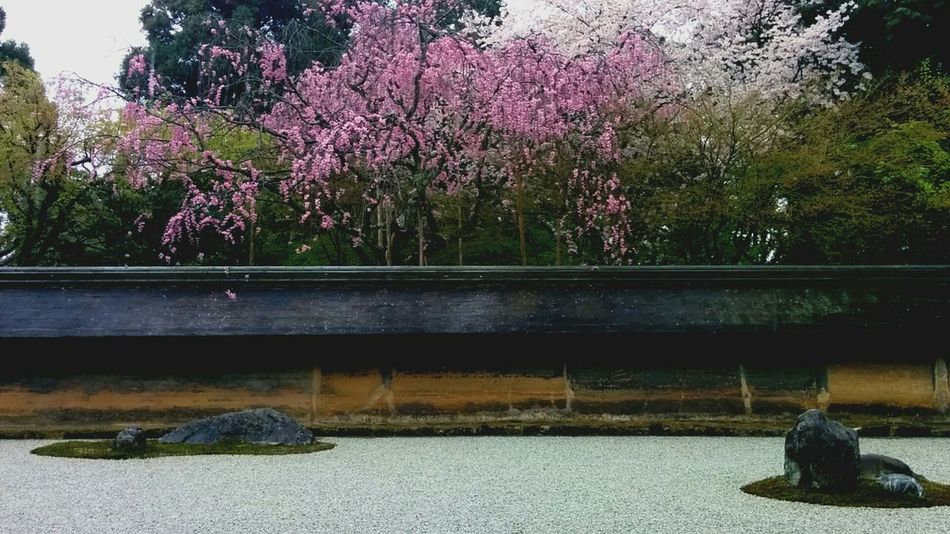 Relaxing Enjoying Life 禅 Flowers Photo Around You Traveling