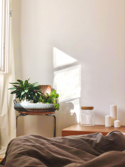 View of potted plant on table at home