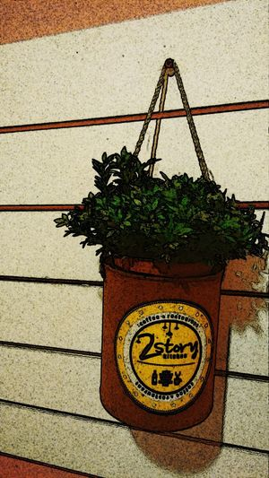 Edited Plants 🌱 Plantography
