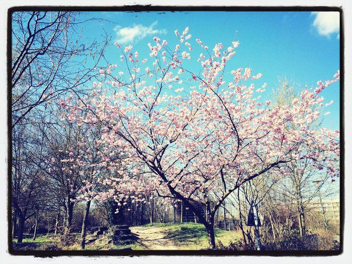 Berlin Springiscoming Beautiful Enjoying Life