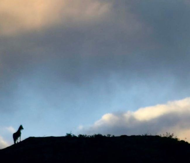 Horse on the mountain Horse Silhouette Sky Cloud - Sky Low Angle View Nature Outdoors Scenics Beauty In Nature