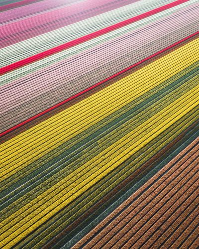 Colorful Netherlands. Landscape Spring Nature Netherlands Lisse  Pattern Multi Colored Full Frame No People High Angle View Textile Carpet - Decor Backgrounds Yellow Textured  Field Indoors  Land Close-up Day Nature Agriculture Striped Crop