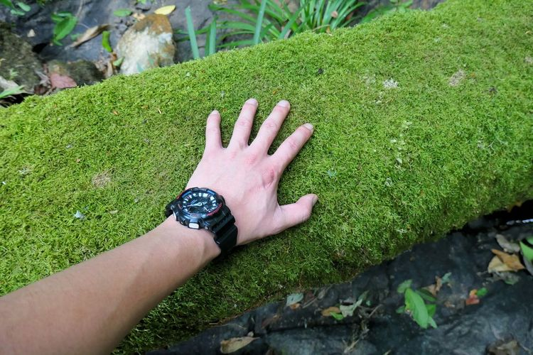 High angle view of woman hand on grass