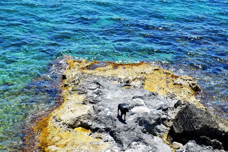 Acqua Marine Beach Blue Dog Ocean View Rock Sicily Summer