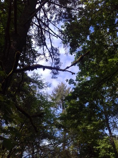 Forest Beauty In Nature No People Outdoors Crazy Branches Sky And Trees