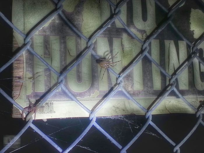 What haunts your dreams? 😨 Creepy Crawlies Grave Yards Nightphotography Spider Spider Web Taking Photos Beautiful Creepy Hanging Out DaveyBlackheart Nasty Spider Spawn Of Shelob Shadows Hello World Bugs Life Fence