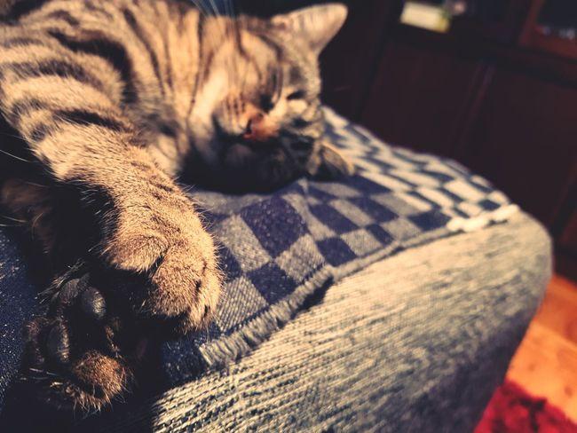 Cat Samsung Samsungphotography Samsung Galaxy S8 Domestic Animals Indoors  Animal Themes Mammal Domestic Cat No People