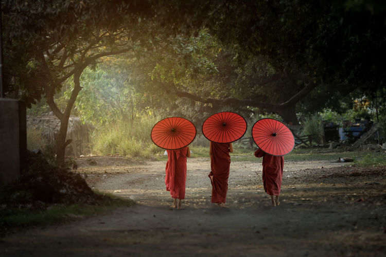 Backside Novice monk Tree Plant Umbrella Group Of People Religion Protection Nature Day Robe Real People People Full Length Belief Traditional Clothing Red Clothing Outdoors Myanmar Burma Bagan Edit Red Monkey ASIA Cultures