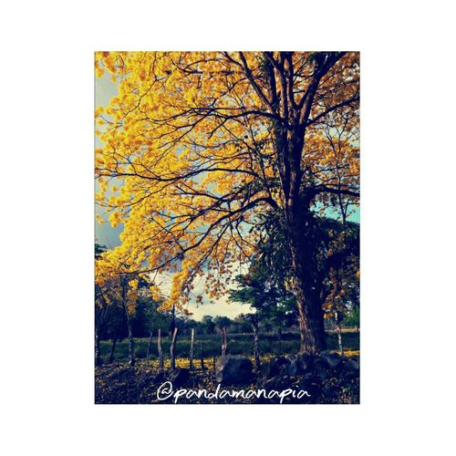 """""""The summer"""" Summer Tree Day Frame No People Growth Outdoors Close-up Nature Pixelated Road Fresh Beauty In Nature Landscape Nature New Life Lovephotography  Life Earth"""