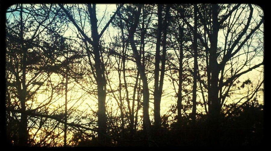 #trees #sunlight #sunset #calm Day