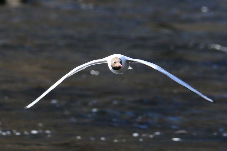 Fly like an