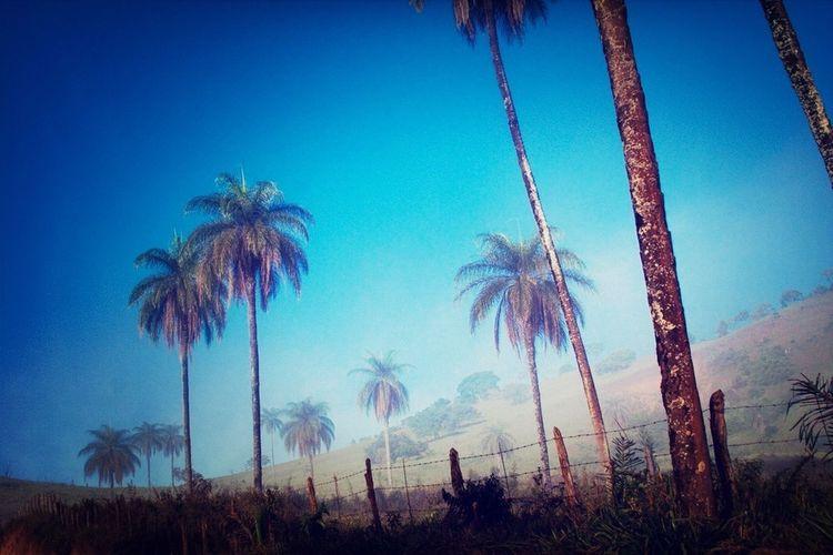 Trees Palm Trees Blue Sky Senhora Do Carmo