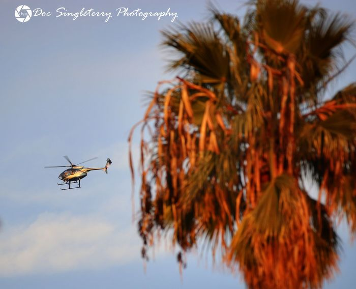 Helio California Helicopter Palm Tree Flight Beautiful View Aircraft Travel Flying ForTheLoveOfPhotography Clouds Sky Blue Sky White Clouds Perspective From My Point Of View Scenics Lifestyles Aircraft Photography Helicopters Helio Sky And Clouds Helicopter Photography