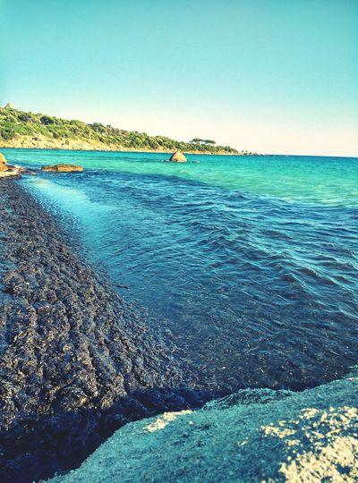 Sea Summer Sardegna Sardinia Capitana Estate2015 Alghe