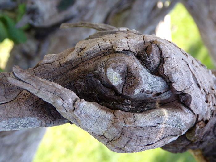 Tree Knots Wood