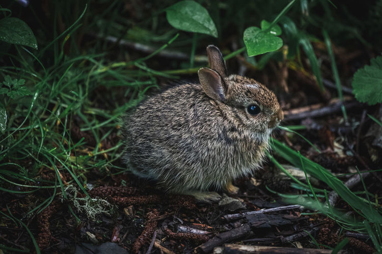 Close-up of a bunny in the bushes