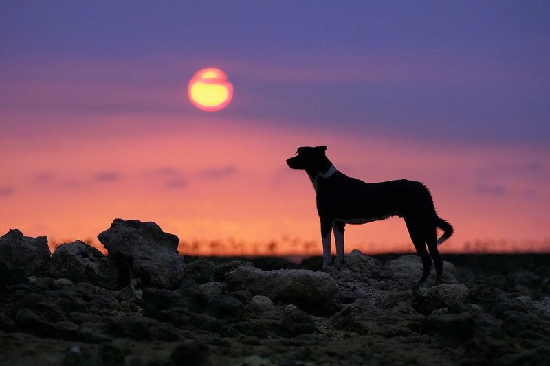 Silhouette horse standing on rock against sky during sunset