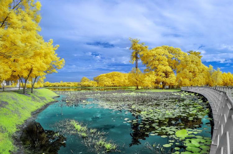 Cyberjaya Lakeside, Malaysia. Autumn Beauty In Nature Bridge Cloud - Sky Connection Cyberjaya EyeEm Nature Lover EyeEm Team Infrared Lake Landscape Nature Plant Reflection Scenics Sky Tranquility Tree Water Yellow
