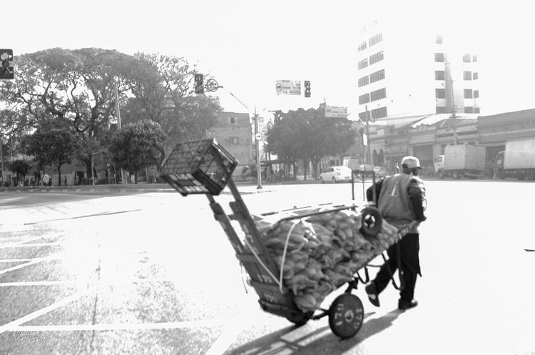 Architecture Baby Stroller Building Exterior Built Structure City Clear Sky Day Full Length Mammal Men Nature Outdoors People Real People Road Sky The Street Photographer - 2017 EyeEm Awards Tree Two People Walking Warm Clothing