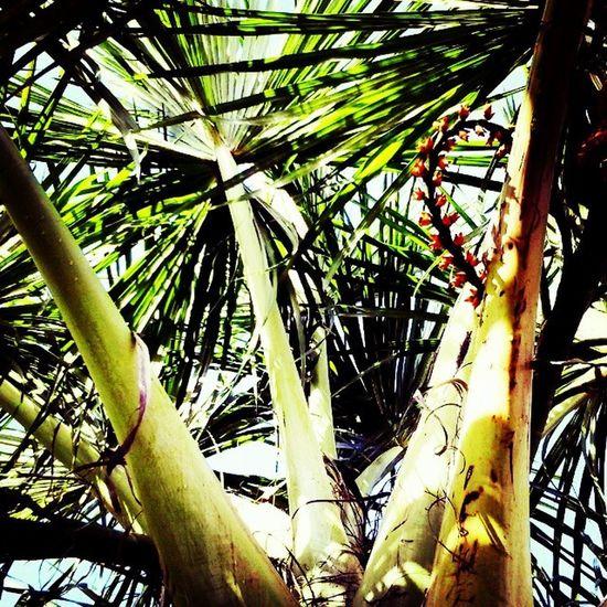 Buriti do campo que prazer... Buriti Boavista Roraima Norte Brasil Sol Natureza