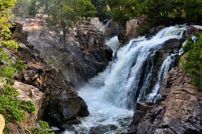 "Hogenakkal Falls - ""Niagara Falls of India"" Beauty In Nature Day Forest Hogenakkal Hogenakkal Waterfalls Motion Mountain Near The Hogenakkal Falls Nature NiagaraFallsofIndia No People Outdoors Rock - Object Scenics SouthIndiaWaterfa Tree Water Waterfall Waterfalls In India"