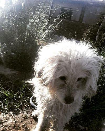 Mydog . Mymodeldog Hermosa Posando Loca Iara Psicopata jajaja