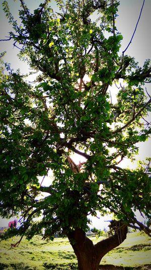 ıamgsphotography Thephotographers Photoismylife Benimrenklihikayem Thephotosociety Benimgözümden Sunset #sun #clouds #skylovers #sky #nature #beautifulinnature #naturalbeauty #photography #landscape MyLifeMyWorldMyEverything Goodday Camera Cool Mylife Nature Midyatsokagi Sky Benimobjektifimden Benimkadrajim Benimrenklerim Turkey Myphotos