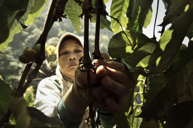 Close-up of woman picking fruits from tree