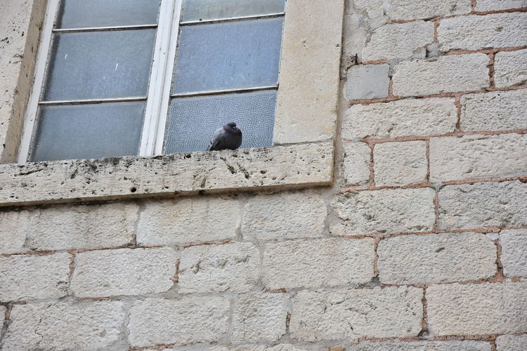 Low angle view of bird perching on brick wall