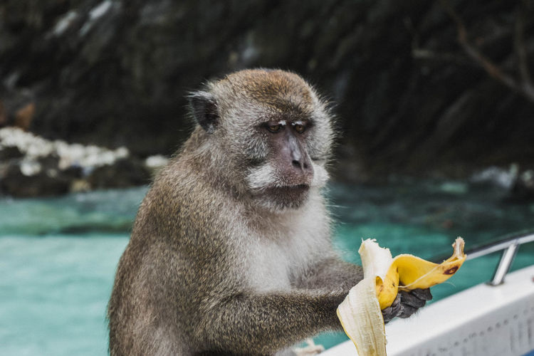 Monkey eating banana against lake