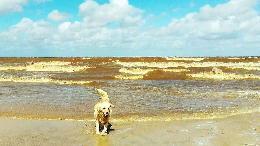 Taking Photos Enjoying Life Golden Retriever That's Me Sea Lifestyle Uruguay Life Is A Beach Enjoying Life Taking Photos Making Life