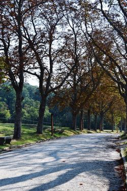 Parco Mediceo D I Pratollino Villa Demidoff Tree Plant Road Growth Nature Tranquility Beauty In Nature