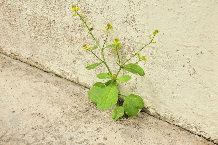 Weeds between
