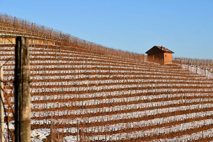 Langhe Landscape Rural Scene Tranquility Beauty In Nature Travel Destinations Hill Top Of The Hills Vineyards  Travel Outdoor Winter Snow Snowed Snowy Landscape Snowy Hills Textures In Nature Blue Sky Agriculture No People Outdoors Day Architecture Built Structure Clear Sky Sky