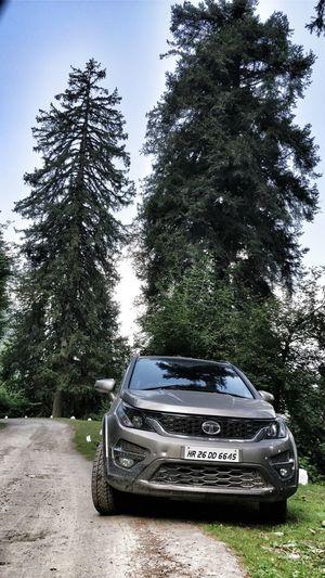 Tree Crash Car