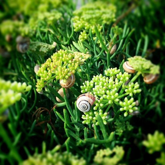 Snail tree Beach Nature Beauty In Nature Close-up Colour Palette Flower Head Full Frame Green Green Color Plant Selective Focus Snails Tranquility
