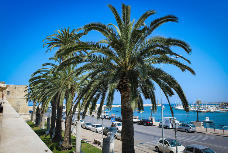 Palm trees by sea against blue sky
