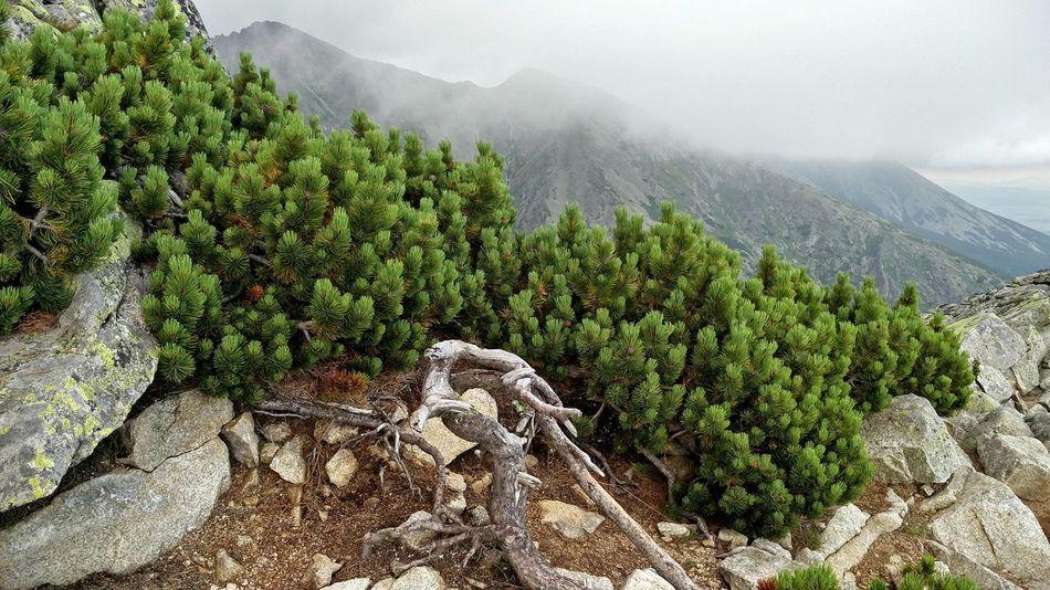 Mountains Kosodrevina Peaks Rocks