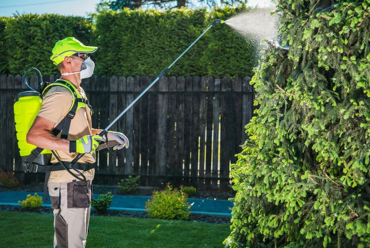 Man spraying pesticide on plants by fence