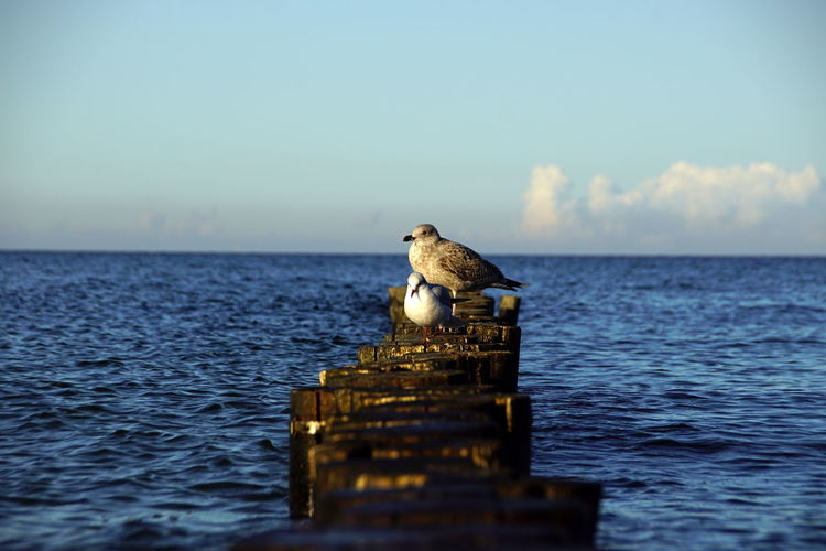View of bird on wooden post by sea against sky