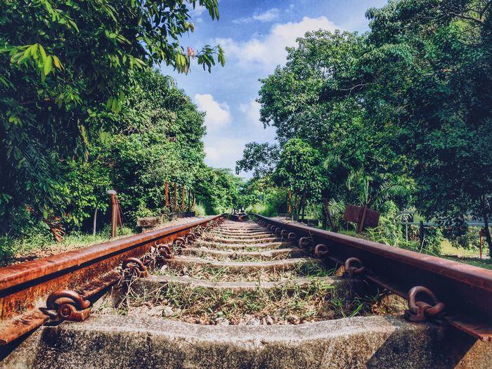 Railroad Track Tree Rail Transportation Sky Nature Outdoors