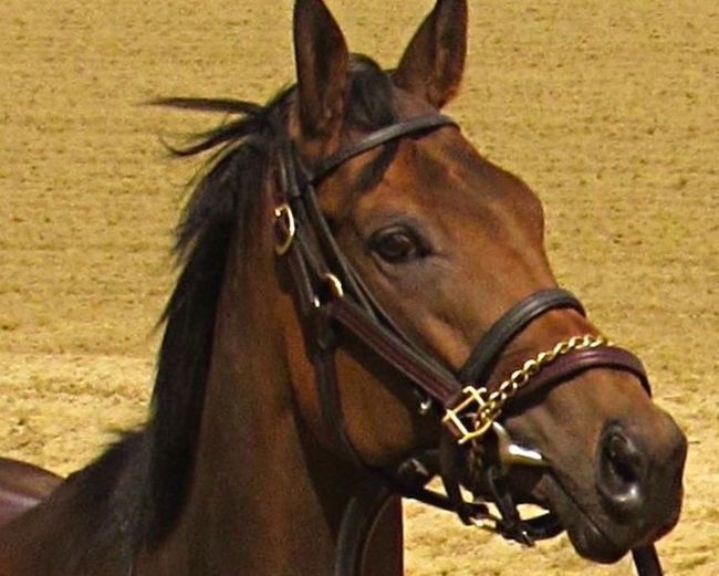 Edited repost Horse Animal Body Part One Animal Close Up Race Horse For The Love Of Horses Animal Themes