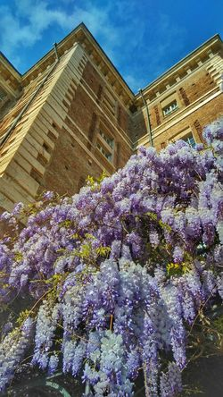Wisteria Rivoli Spring Flower Architecture Low Angle View Built Structure Building Exterior History Sky Travel Destinations Day Cloud - Sky Outdoors No People Beauty In Nature Nature Freshness