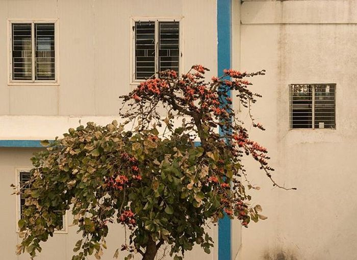 A window from another window. Nature Architecture Natureperfection Architecturephotography Retro Window View Composition Abstract Naturelovers Frame Perfection Instagram Instalike Nikond5300 Nikoninsta Lovely Beautiful Scene Tree Natureandlife Nikon Balcony Windowview Coloursofindia coloursofnature spring flowers pink bougainvillea