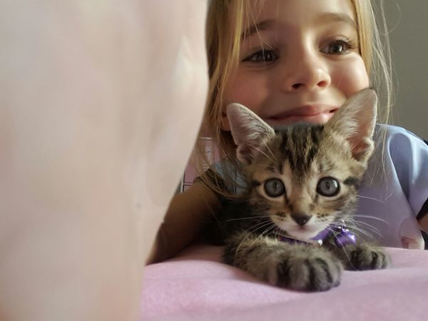 Pure young girl . playing with kitten.Beautiful. joy. Happiness♥ Check This Out Kitten 🐱 Under Blanket Young Girl Young Kitten pure joy Close-up Playing With My Cat Cat Lovers 🐱💞 City Life Childhood